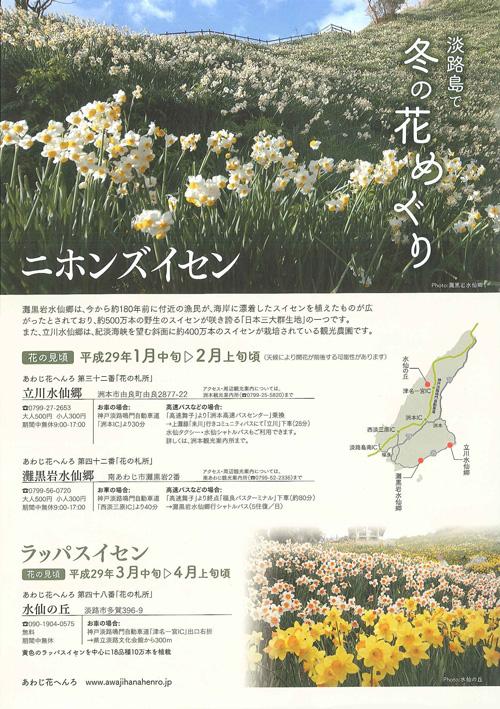 淡路島で冬の花めぐり「水仙」