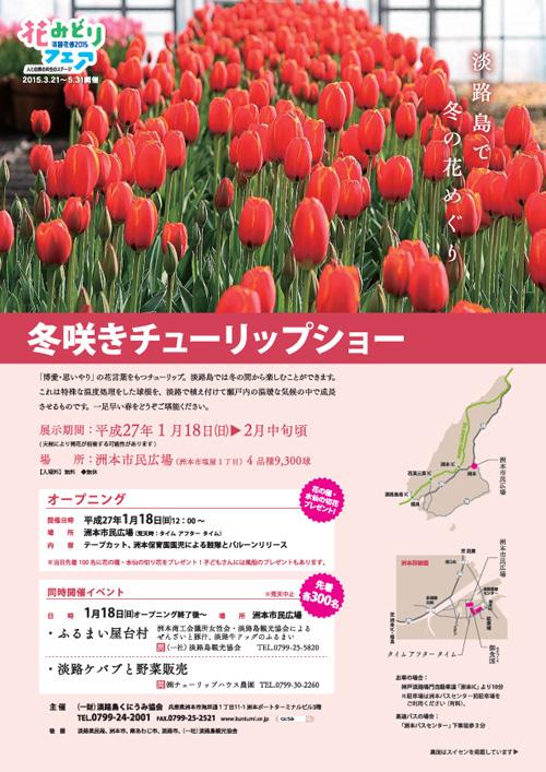冬咲きチューリップ2015