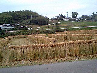 inaho2.jpg