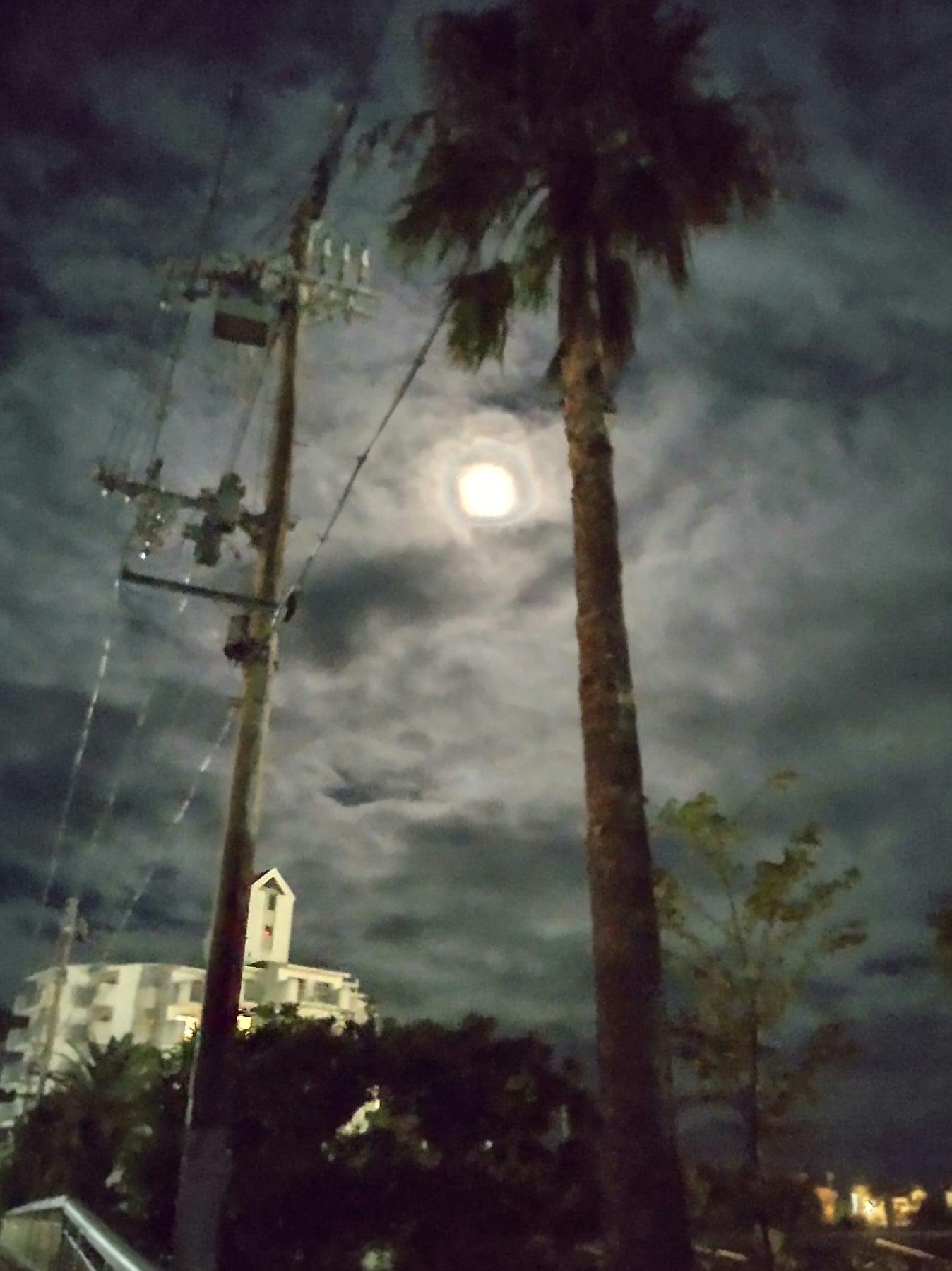 月が綺麗ですね・・・・・   中秋の名月をどうぞ